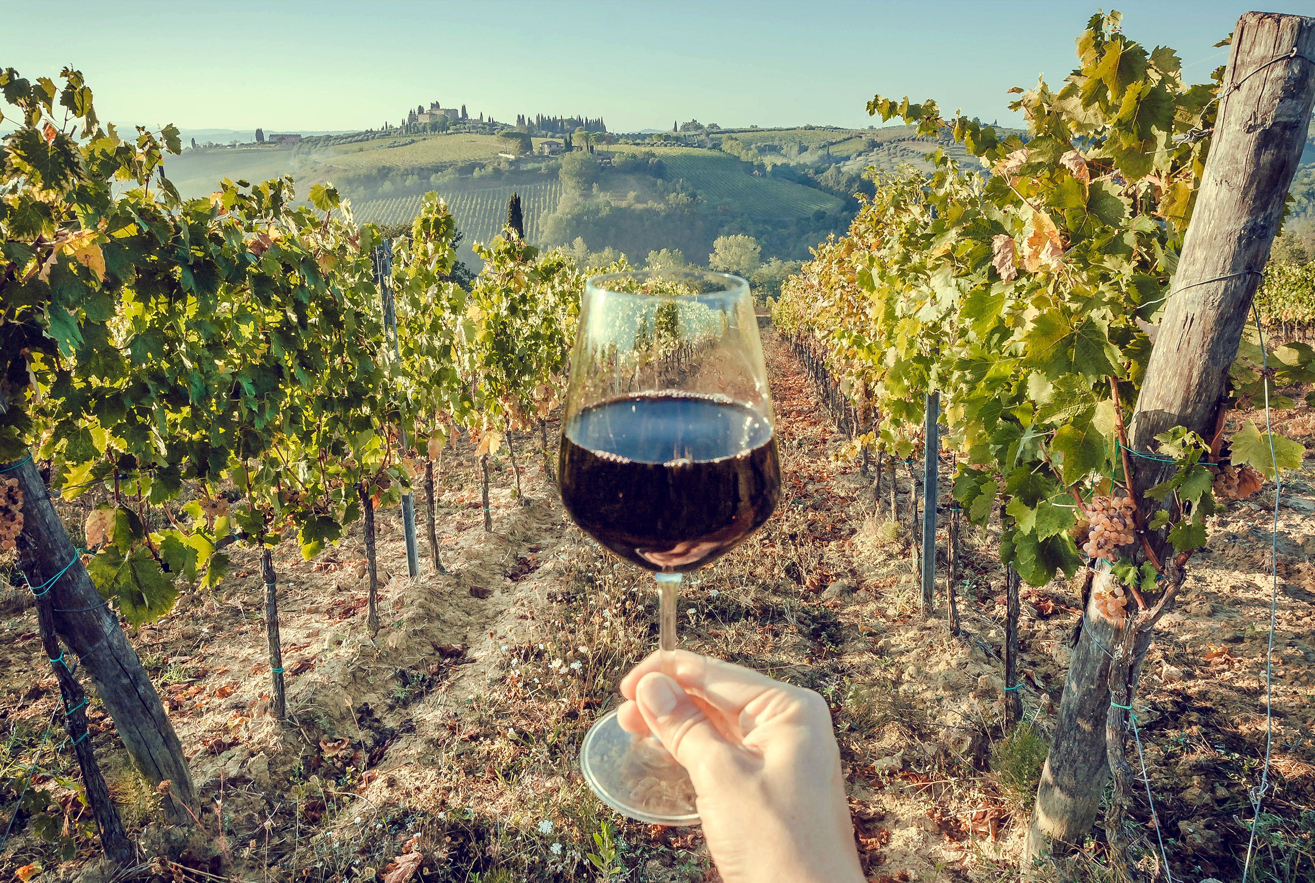 Nero d'Avola, il più famoso dei vini di Sicilia