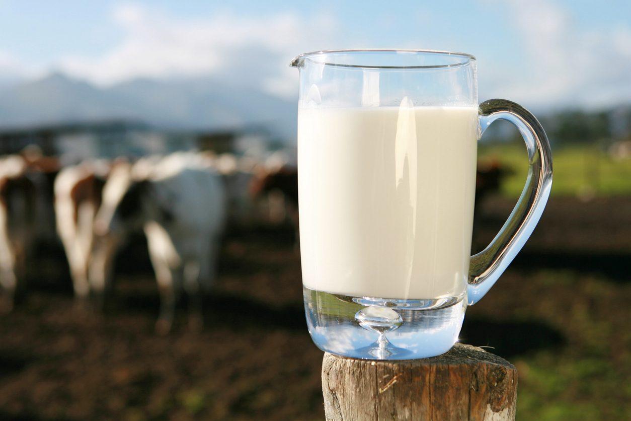 Report va in Molise: ecco le aziende locali che usano latte straniero