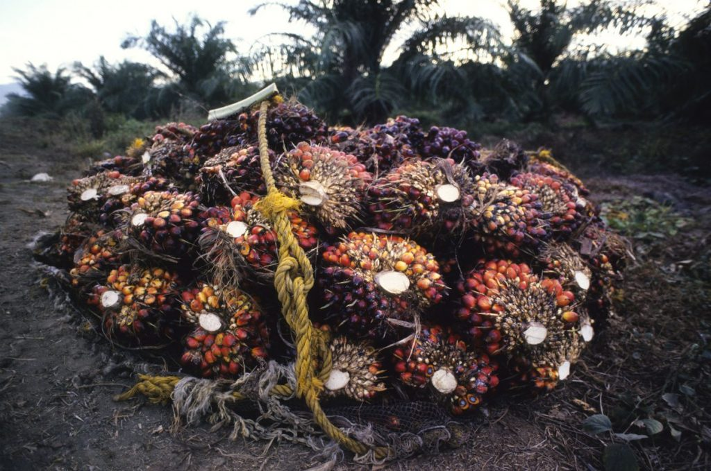 olio-di-palma-foresta-amazzonica-brucia