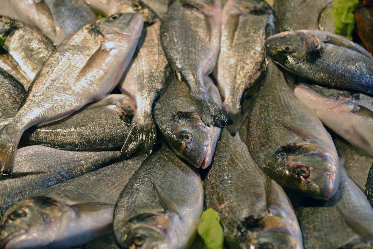 Allarme sul pesce inquinato sulle nostre tavole, l'inchiesta di Report