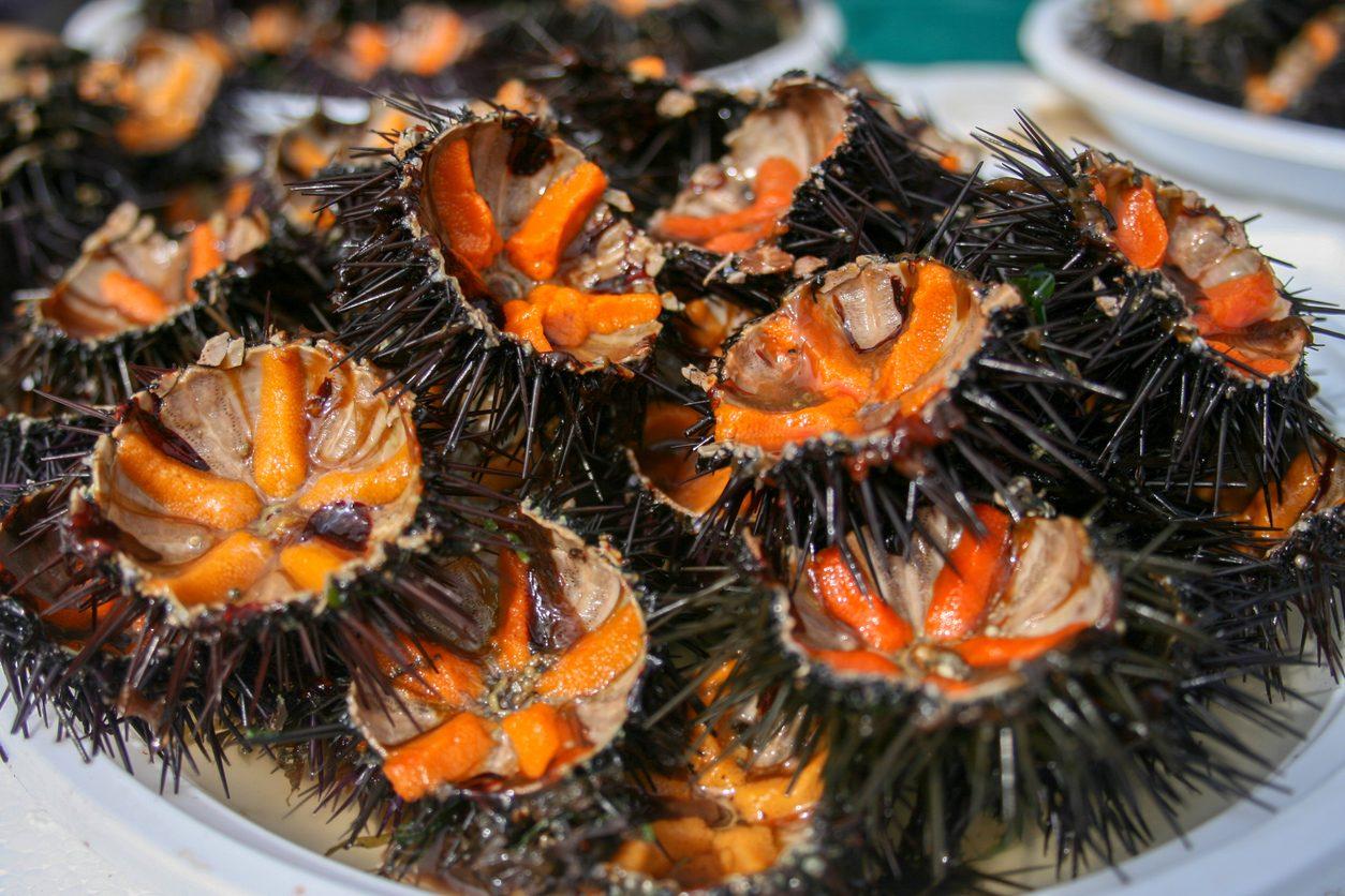 Il piatto che vuole combattere l'estinzione dei ricci di mare