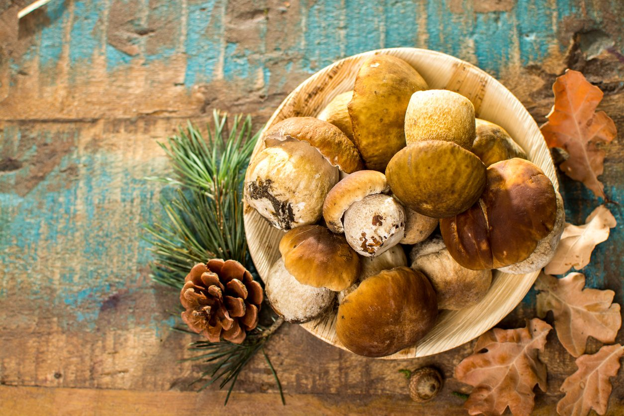 Come congelare i funghi porcini: trucchi e consigli per farlo nel modo corretto