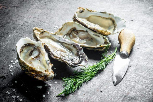 ostriche-oyster-oasis-corrado-tenace