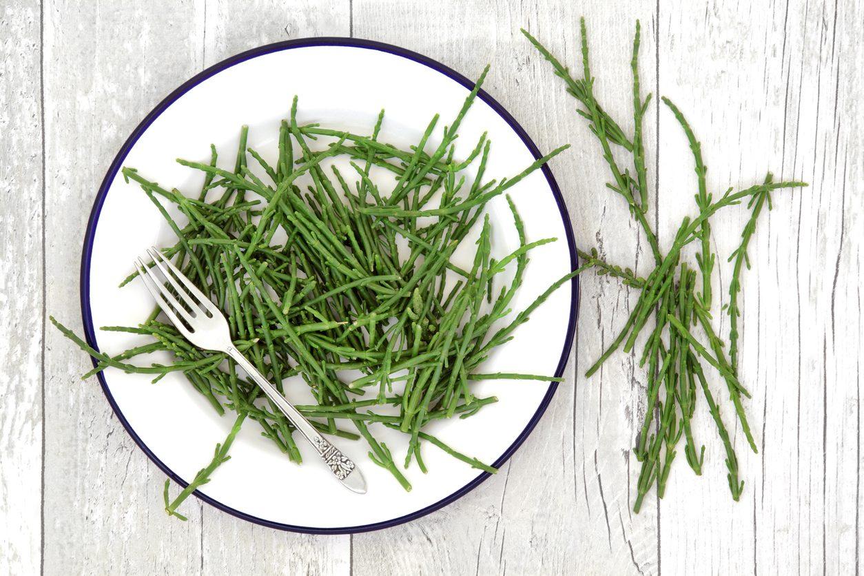 Salicornia: proprietà benefiche, usi e come riconoscerla