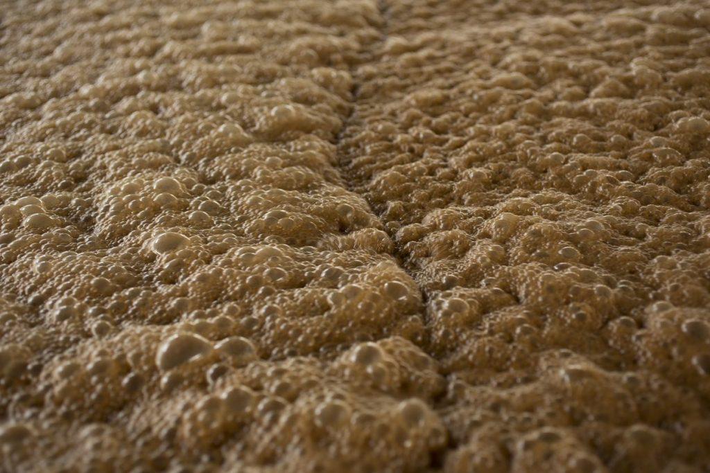 fermentazione-melassa-rum