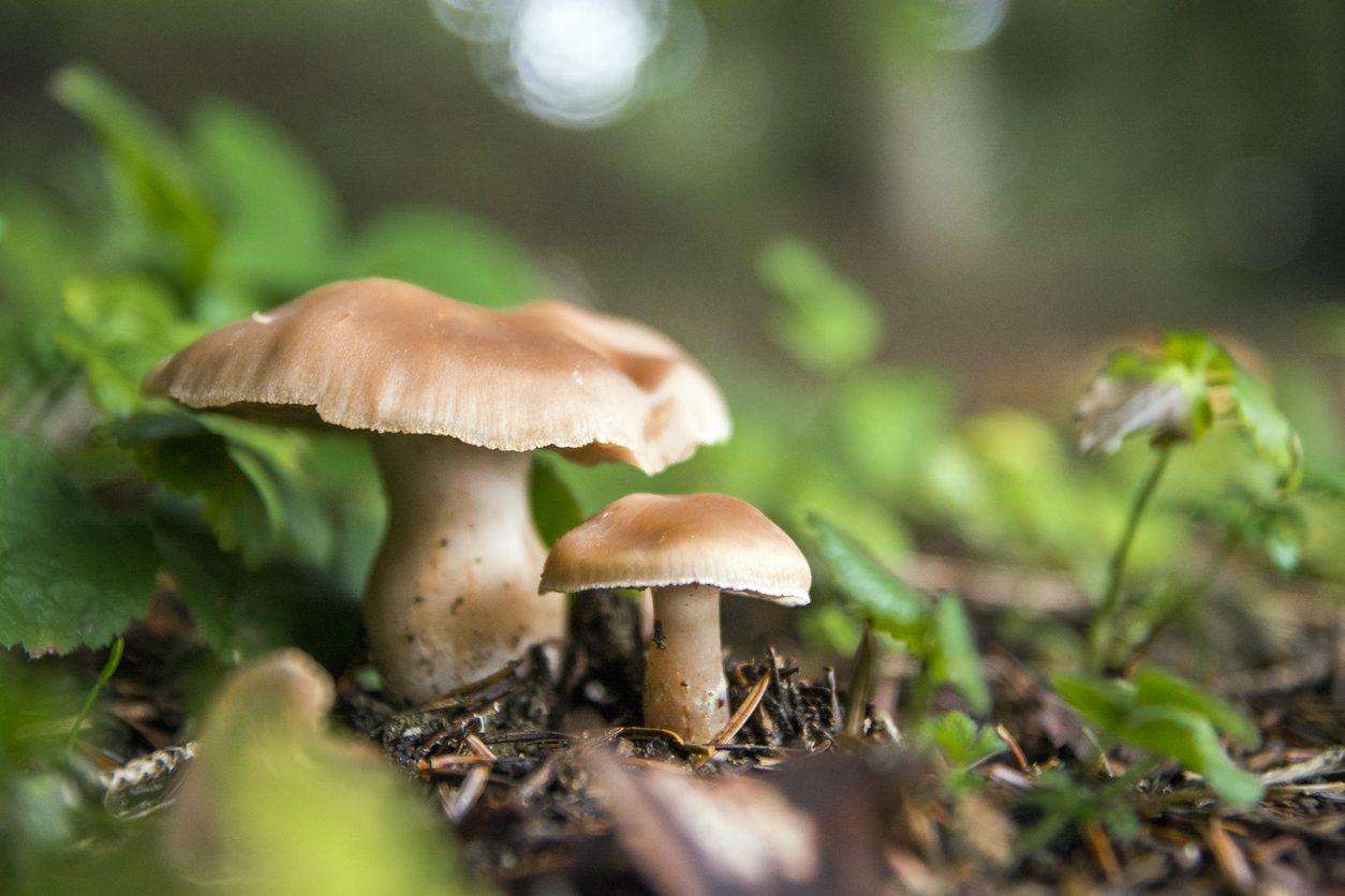 Funghi velenosi: come riconoscere le varietà da evitare