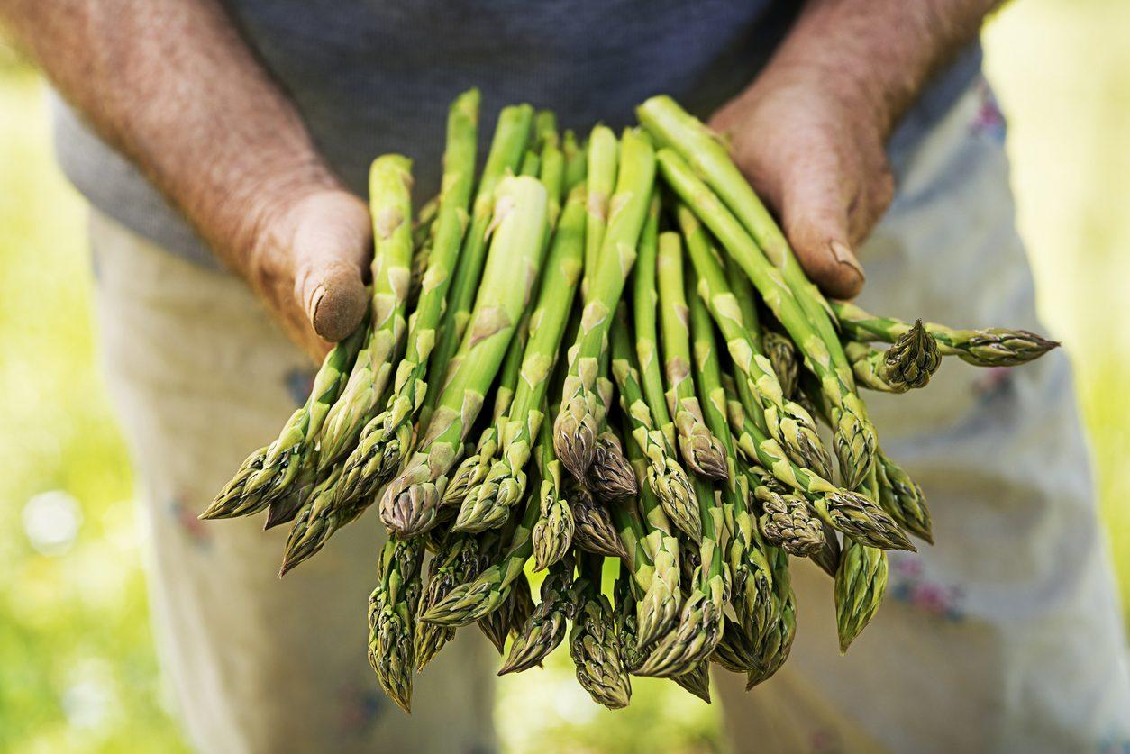 Come si congelano gli asparagi: metodi e istruzioni per conservarli al meglio
