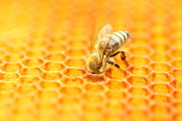 ferrero-miele
