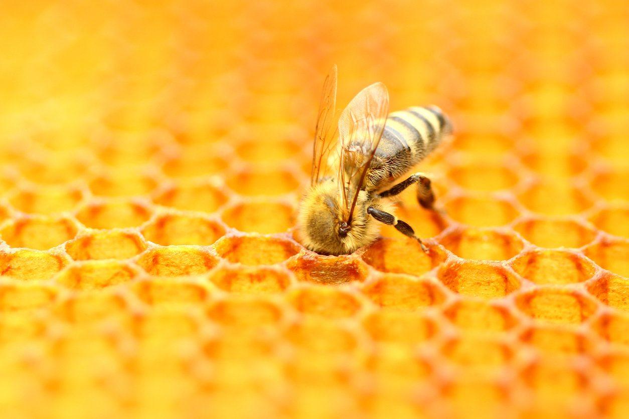 Ferrero scende in campo per salvare le api: adottati 10 alveari grazie al progetto 3Bee