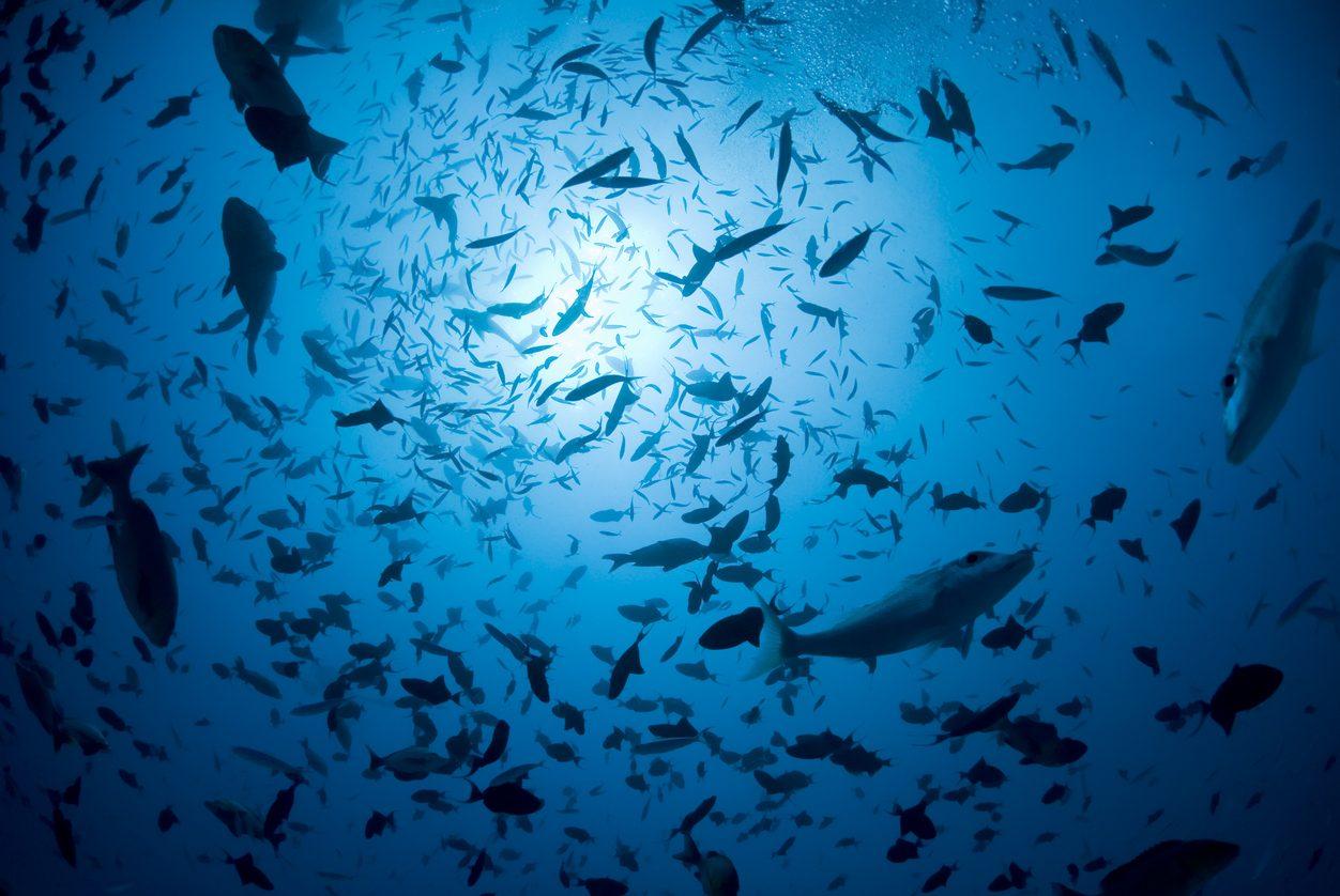 Le reti di rame negli allevamenti in mare possono salvare il pianeta