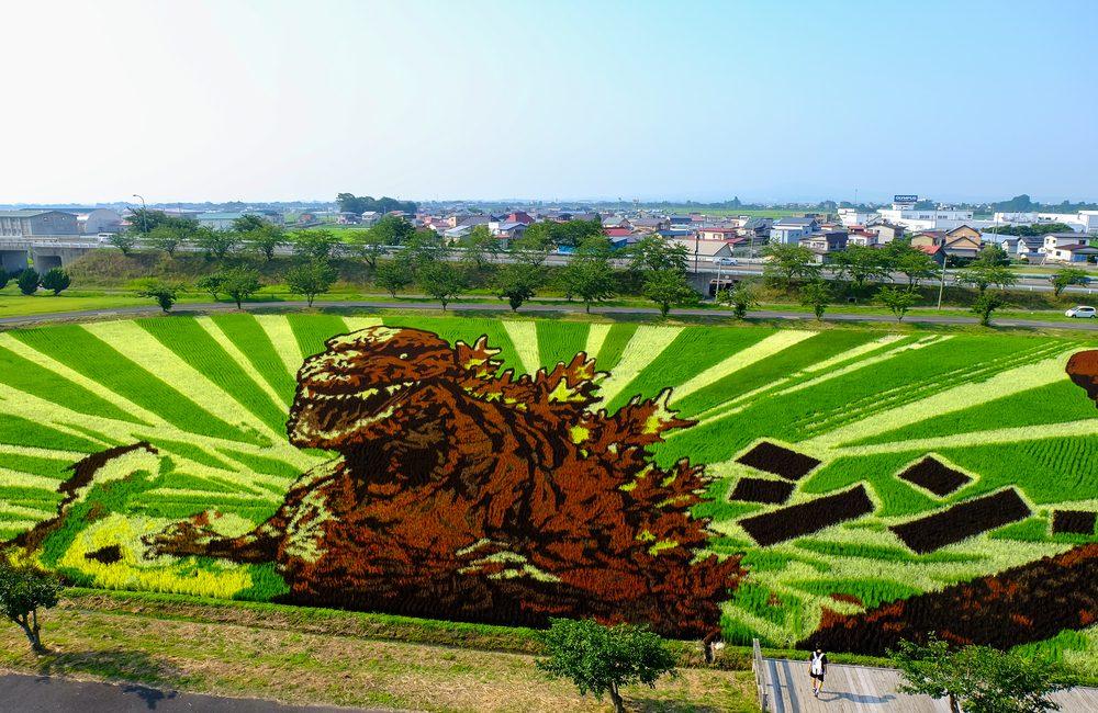 In Giappone le risaie sono vere e proprie opere d'arte