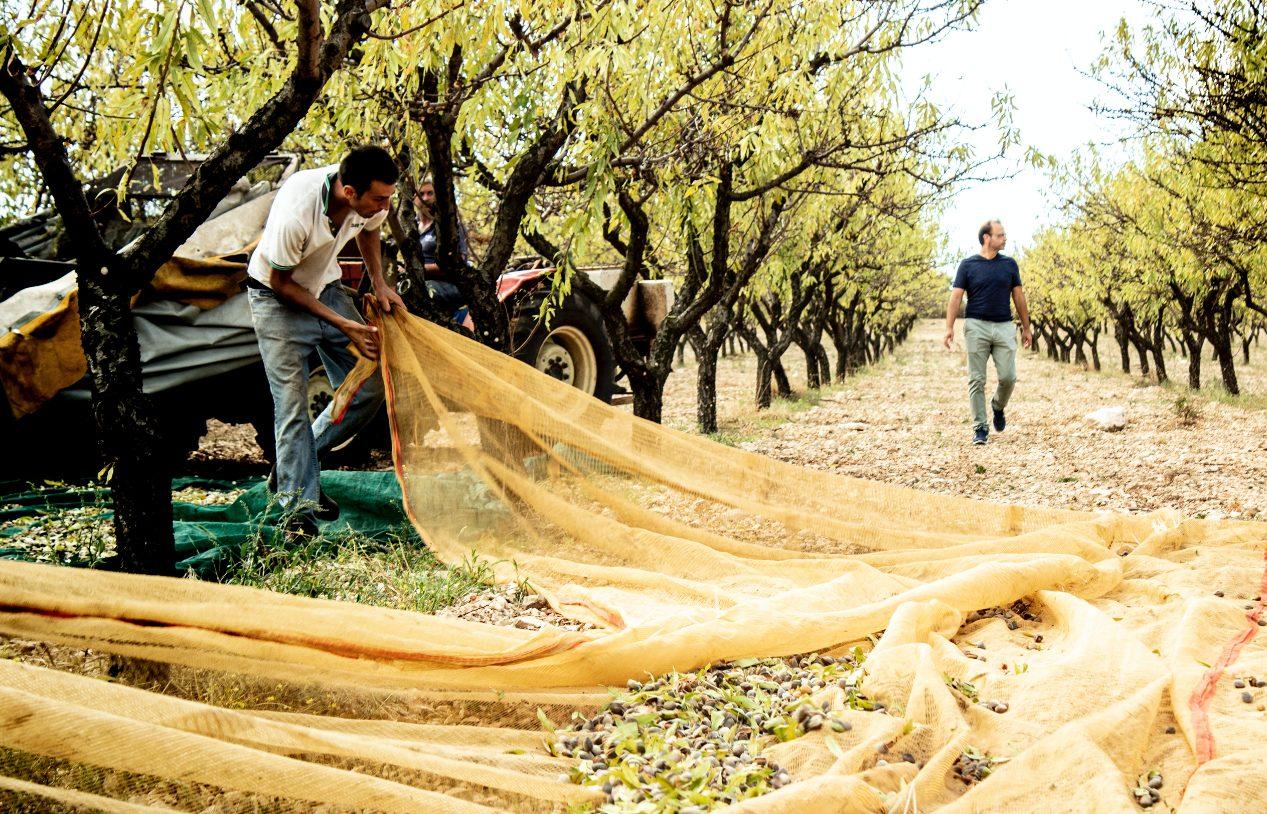 Nell'alta Murgia la prima fattoria in cui dalla mandorla si creano formaggi (e non solo)