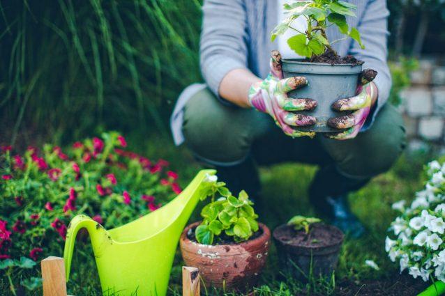 Scarti alimentari: come usare i semi per coltivare le verdure in giardino