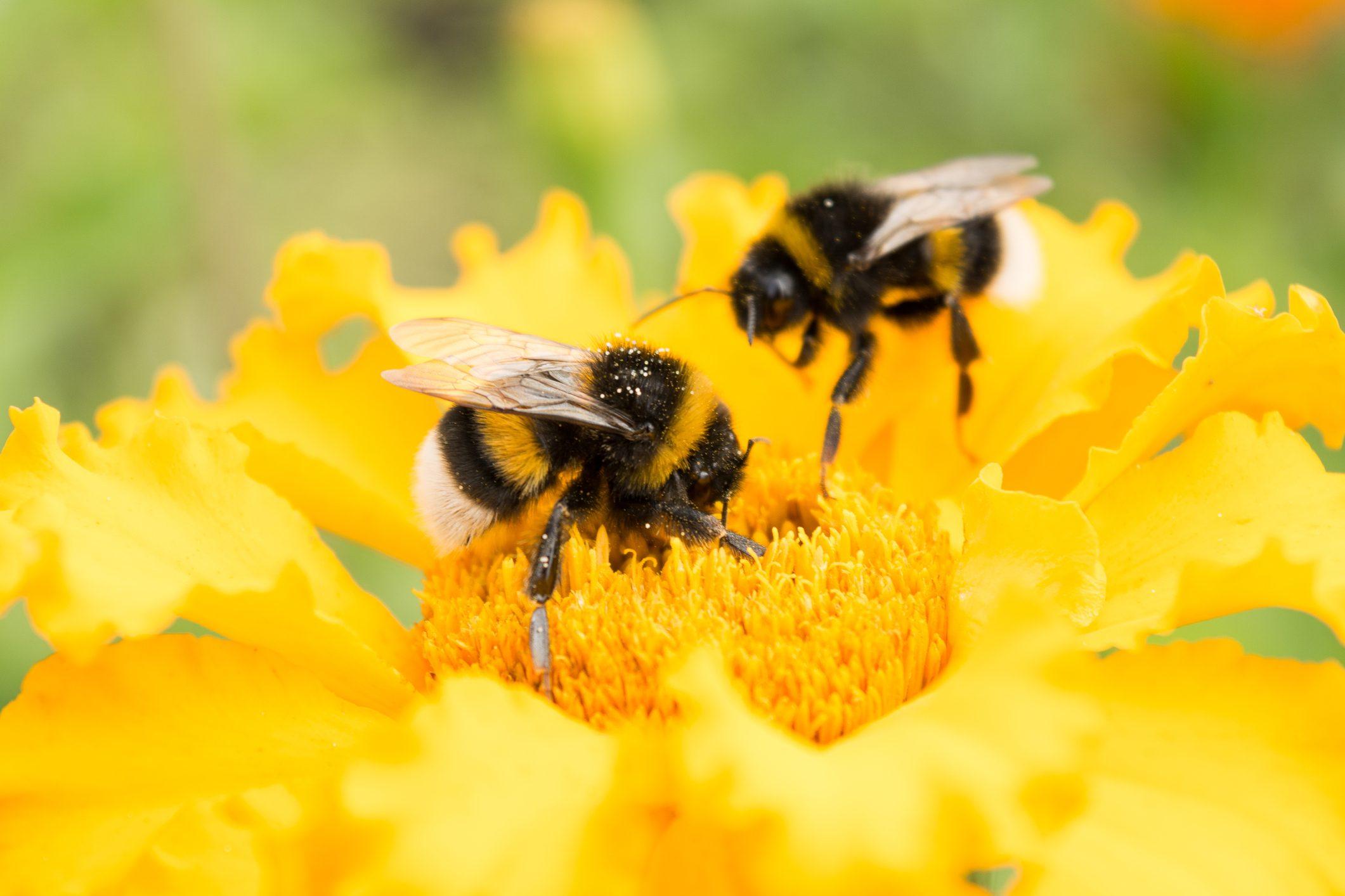 """3Bee: la startup italiana che salva le api con le """"adozioni"""""""