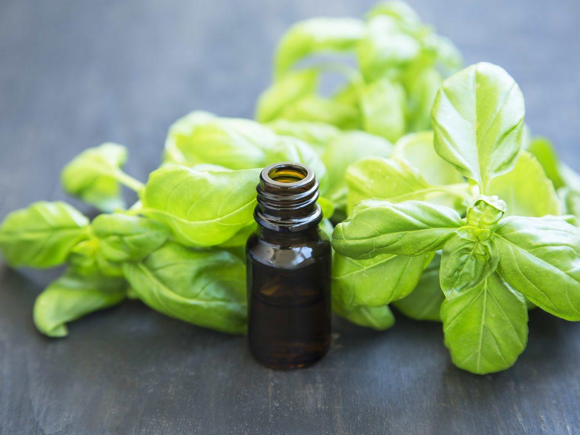 Olio al basilico: la ricetta del condimento aromatizzato