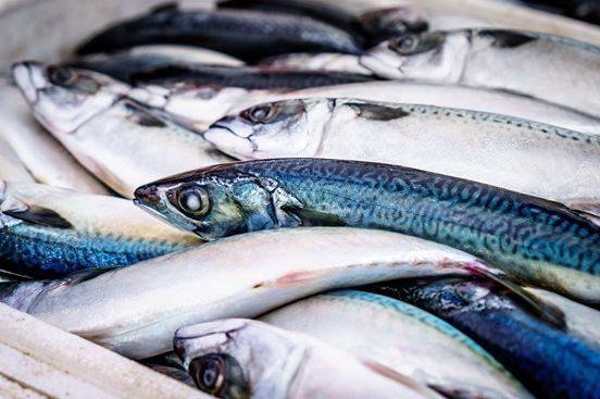 A Roma arriva DOL Fish: consegna pesce fresco, già pulito, direttamente a casa tua