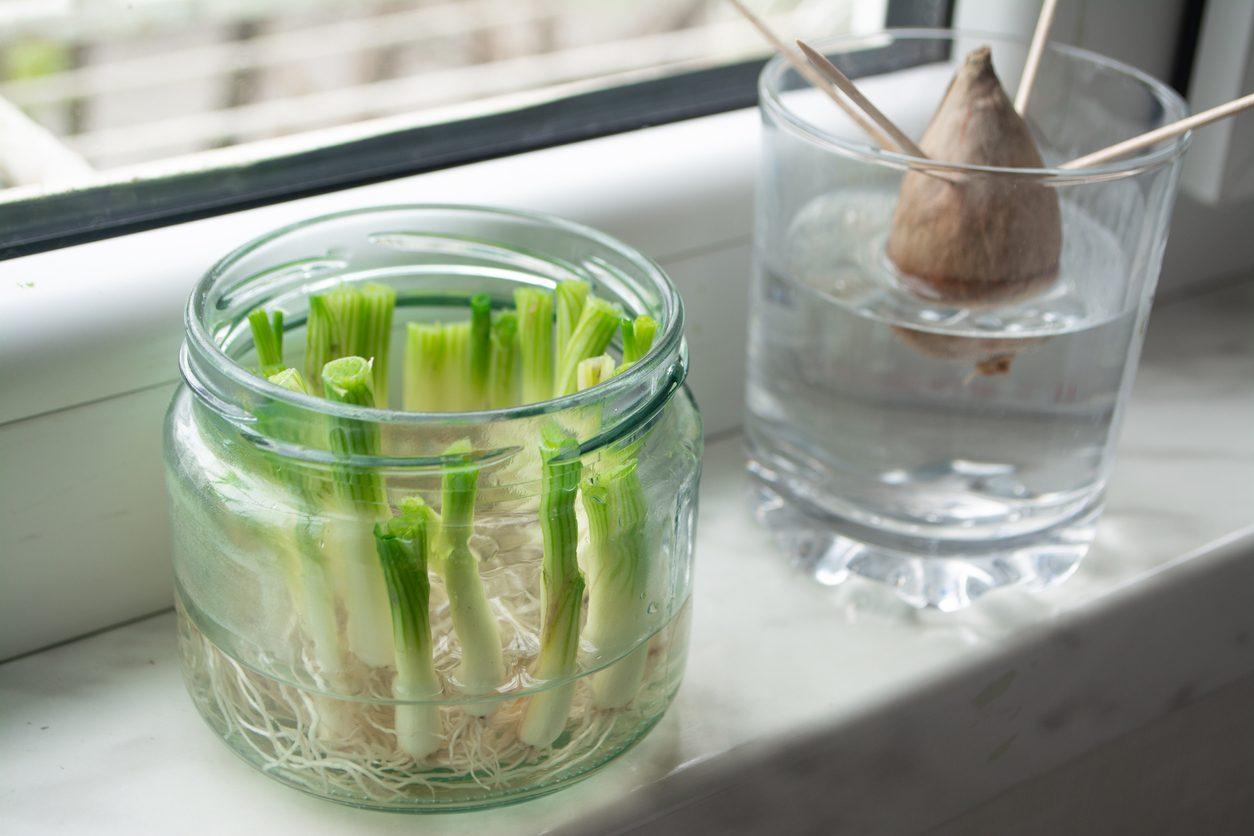 Regrowing: come produrre ortaggi, verdura e frutta in casa a partire dai loro scarti