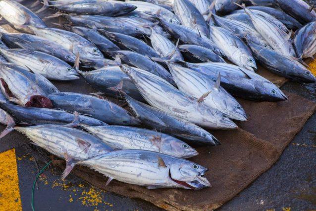 tonno artigianale
