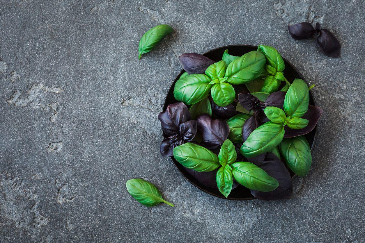 Varietà di basilico: quali sono le migliori e come usarle in cucina