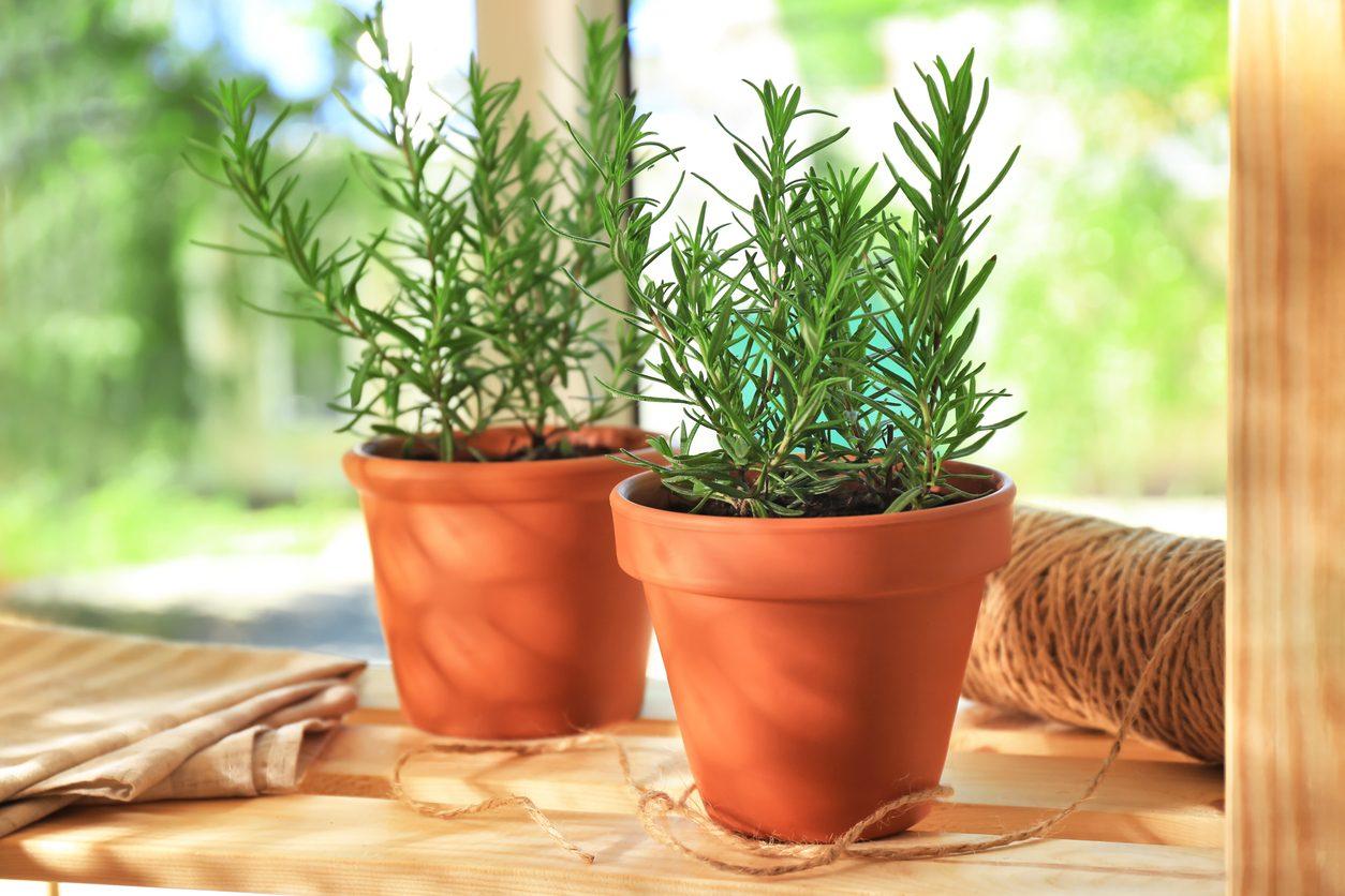 10 piante da appartamento che aiutano a purificare l'aria in casa