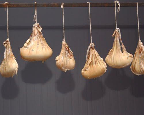 Il Cazu de cabrittu: il formaggio più antico del mondo e più caro d'Italia