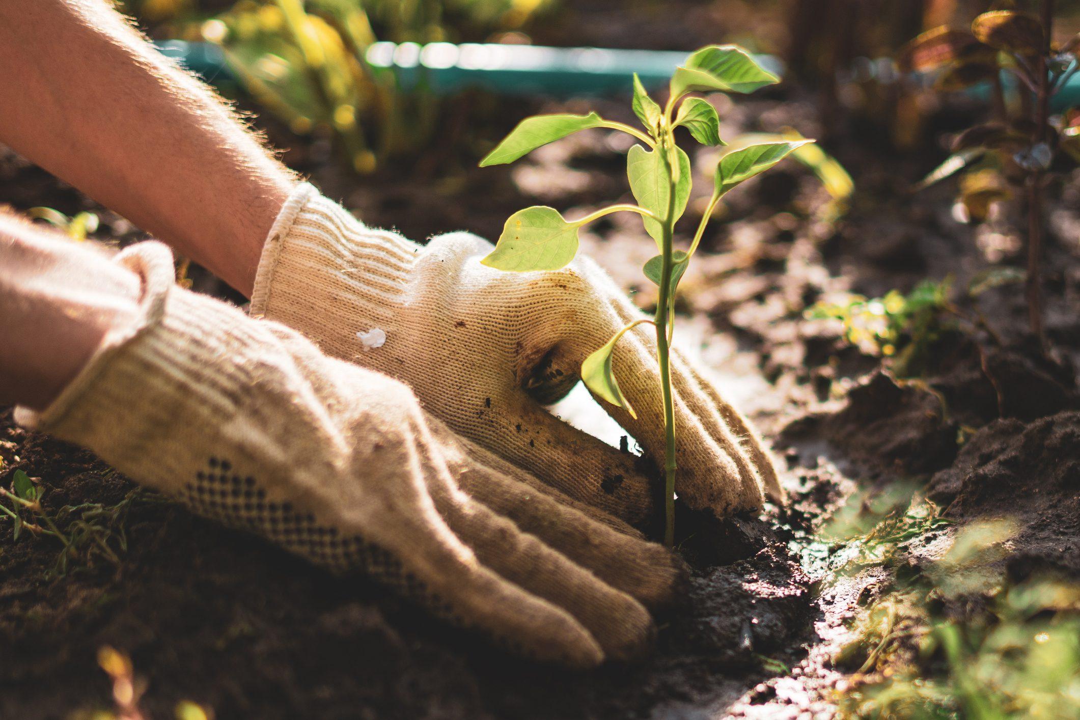 I Menu4Planet e il decalogo sull'agricoltura sostenibile: le direttive del WWF