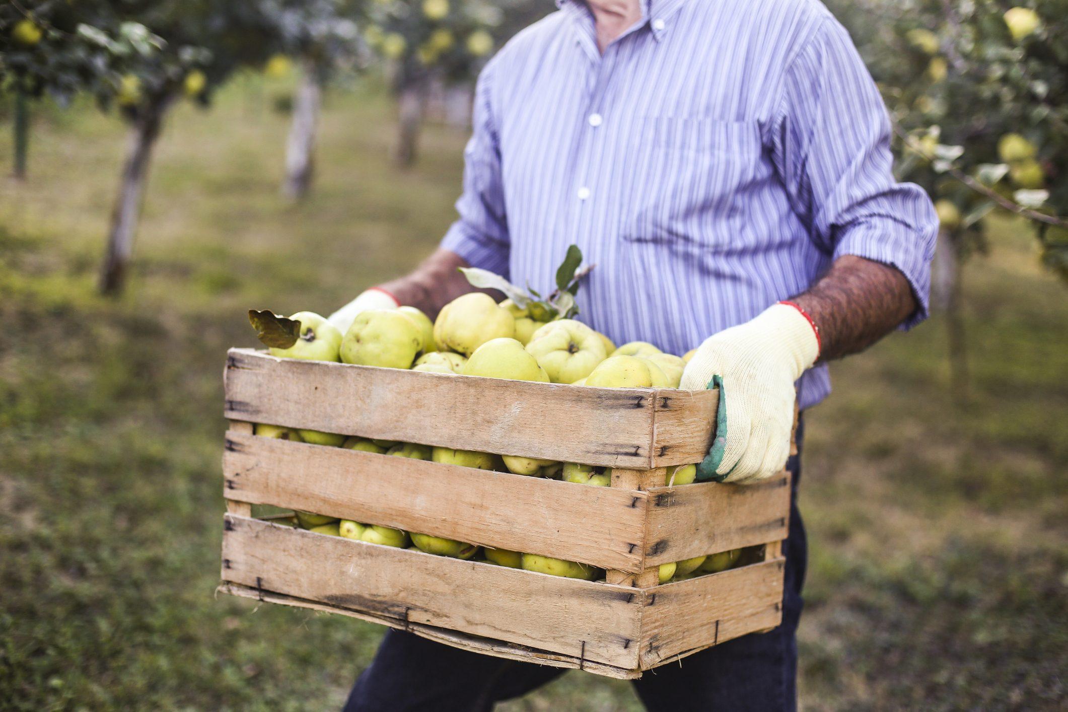 Frutta gratis in cambio dei mozziconi di sigaretta: l'iniziativa a Ravenna