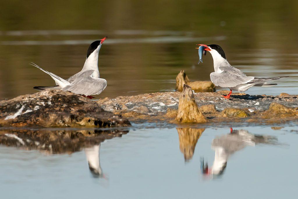 """I gusci delle cozze diventano """"oasi"""" per gli uccelli in migrazione"""
