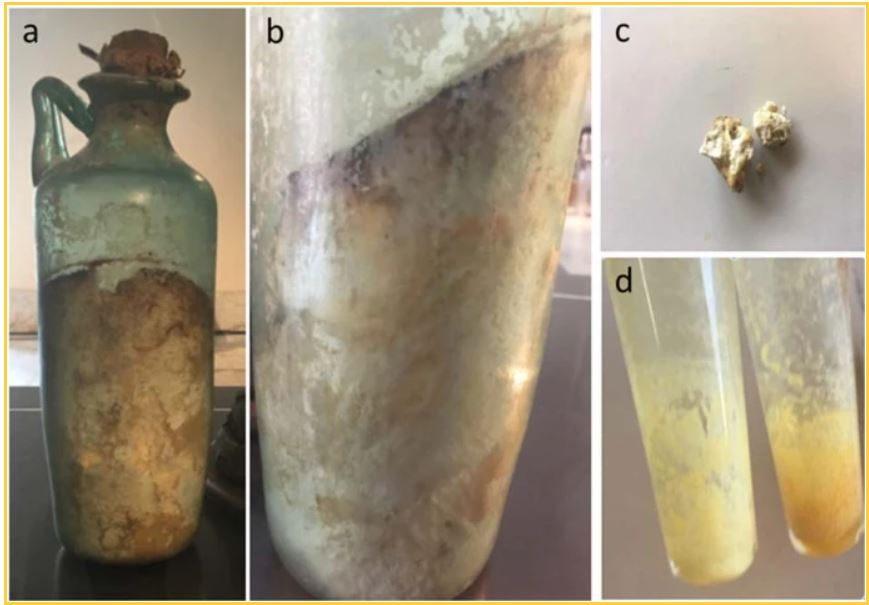 Le foto dello studio pubblicate su Nature