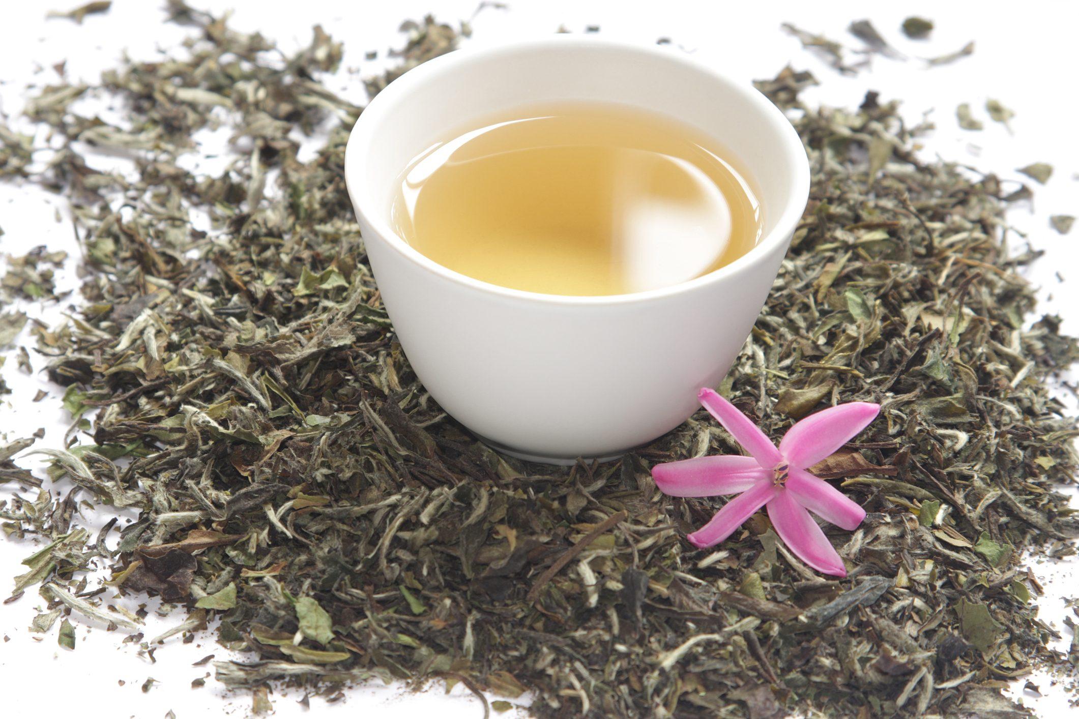 Il miglior tè bianco al mondo è italiano e si produce sul Lago Maggiore