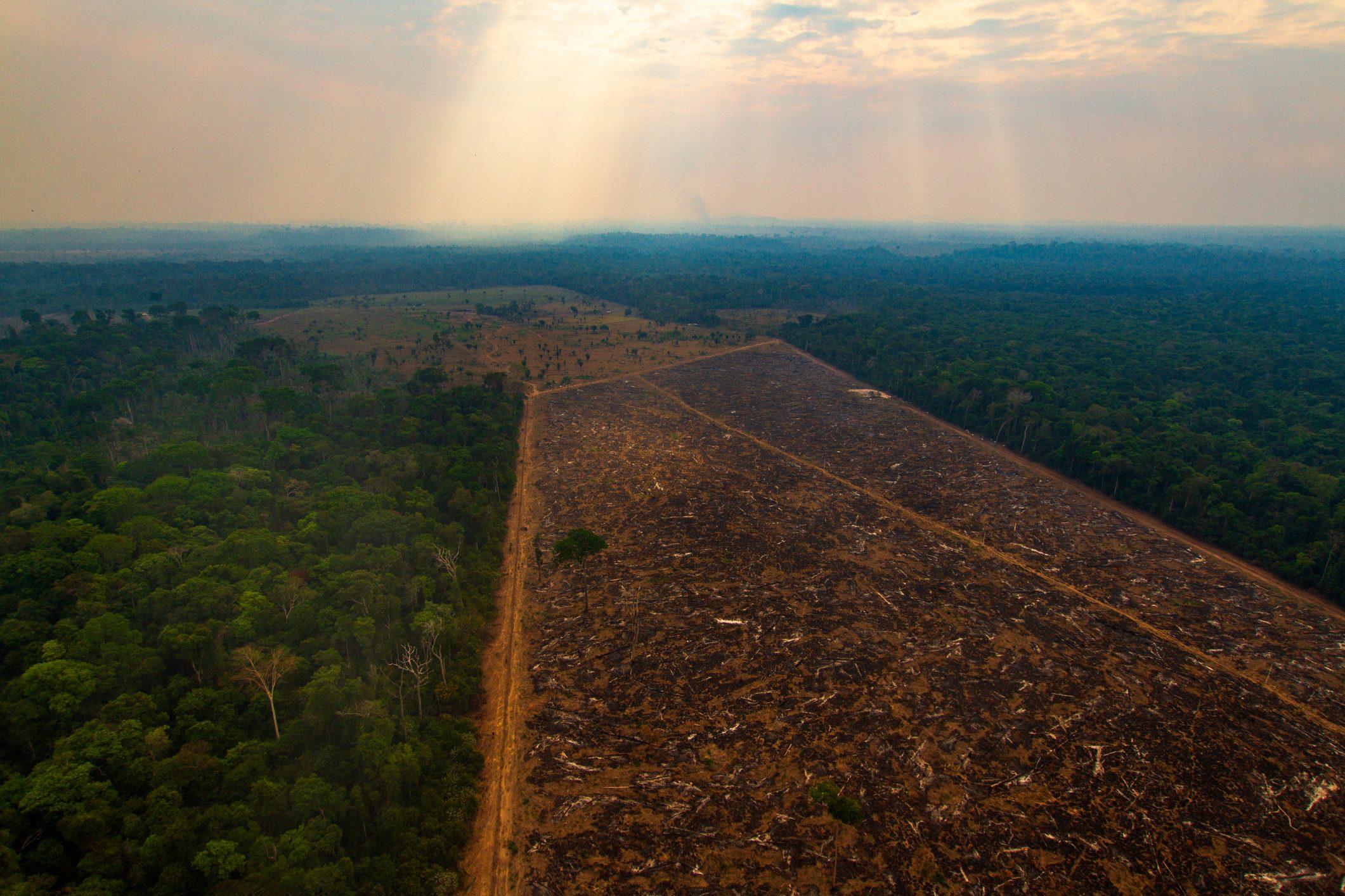 Quanta foresta hai mangiato oggi? Il report shock del WWF sulle abitudini alimentari