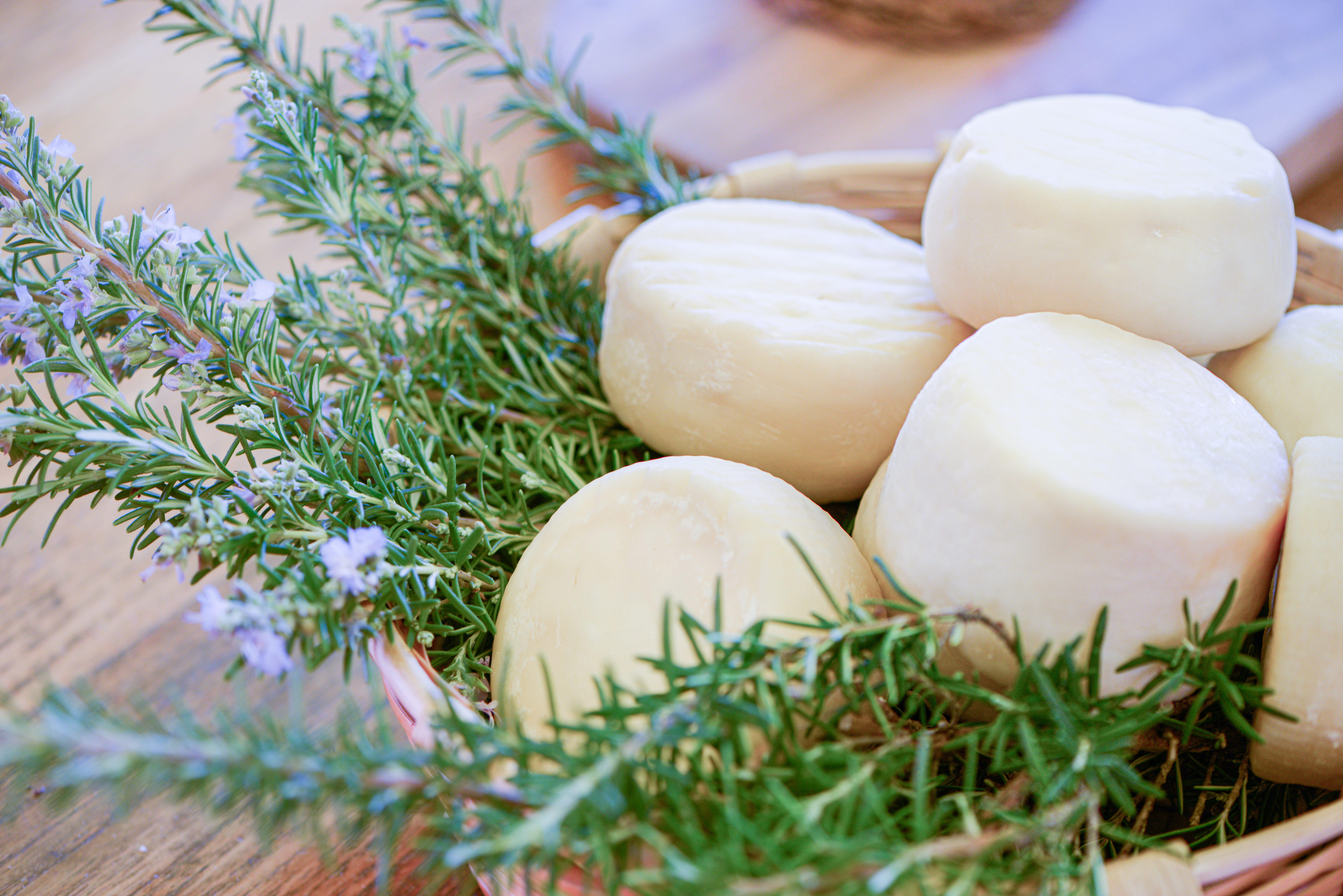 Cacioricotta di capra del Cilento, un formaggio raro e ricercato: come nasce e come usarlo