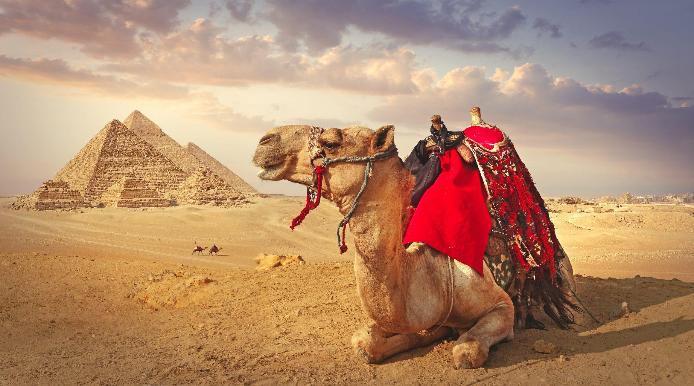 Ritrovato il birrificio più antico del mondo: è in Egitto e ha ben 5.000 anni