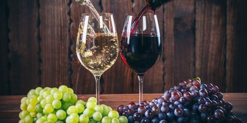 Dalla vigna più antica al vino con la coca: 30 curiosità storiche sul vino da conoscere