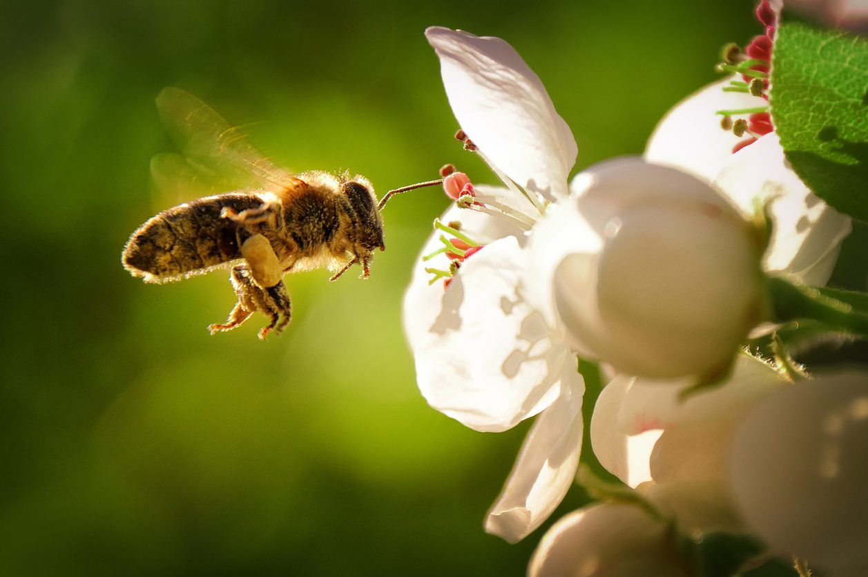Chi era Andrea Paternoster, l'uomo che ha rivoluzionato il mondo del miele (e delle api)