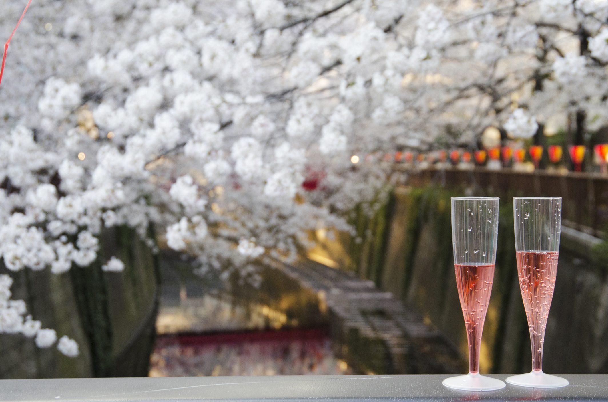 Cos'è l'hanami: la millenaria tradizione giapponese che omaggia i ciliegi con un picnic
