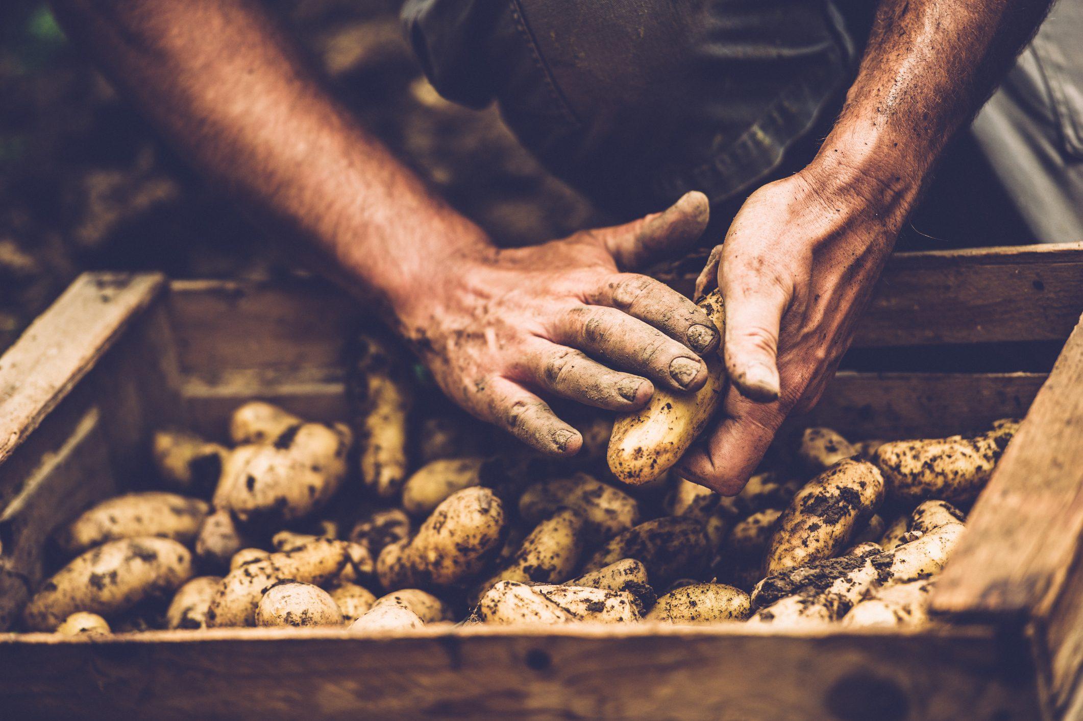 patate-parmentier