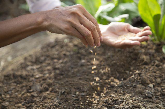 Sementi Indipendenti: il progetto per la salvaguardia della biodiversità agricola