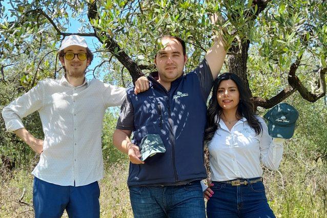 adotta un olivo progetto ager oliva toscana