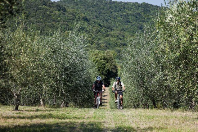 In Umbria il turismo ciclabile fa visita agli ulivi