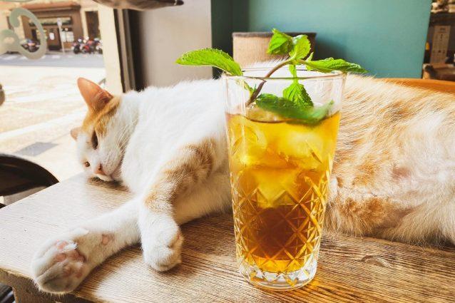 crazy-cat-cafè