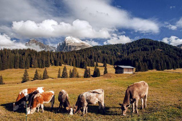 scuola per diventare malgari Alto Adige
