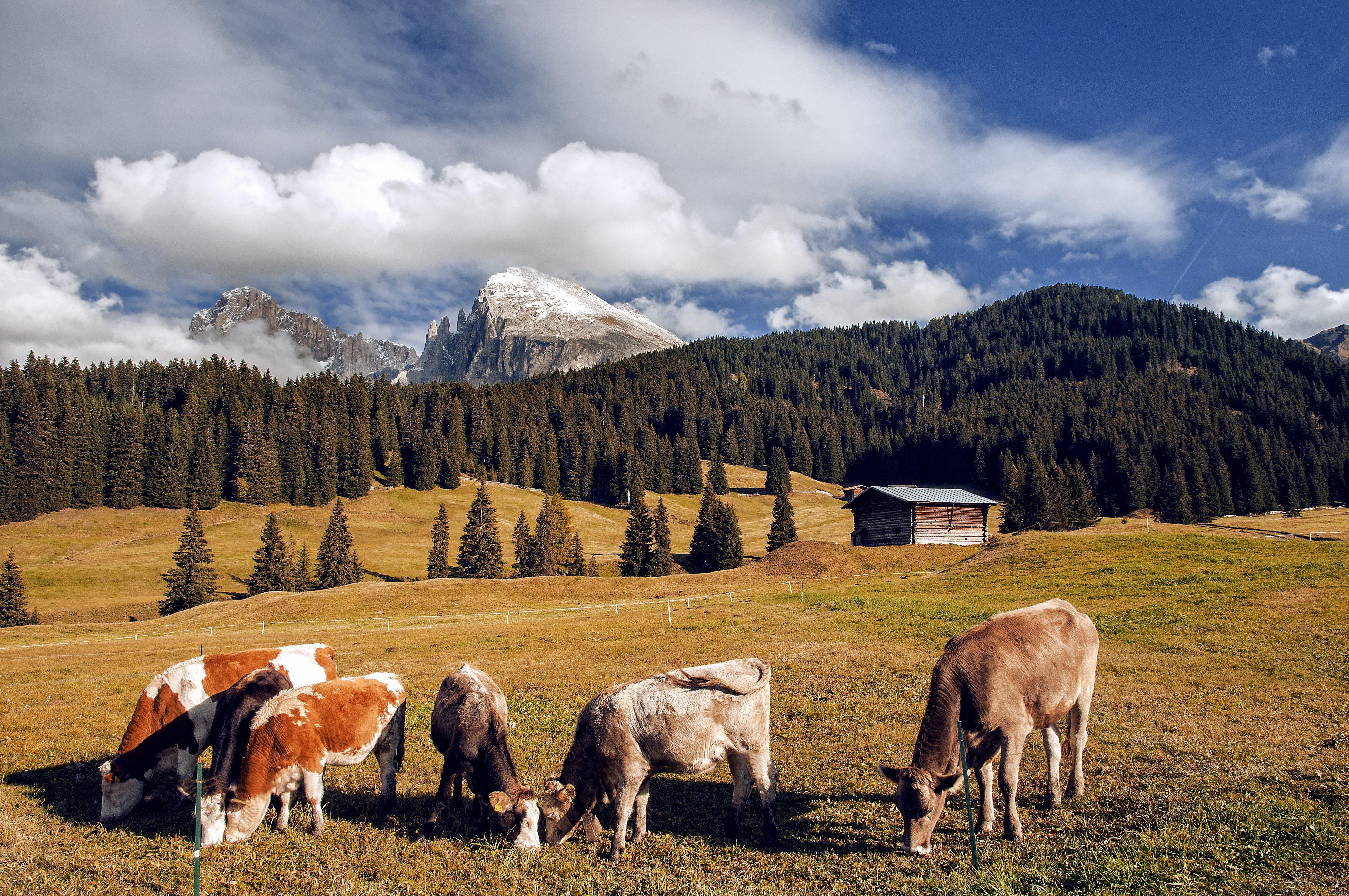In Alto Adige ha aperto una scuola per diventare malgari