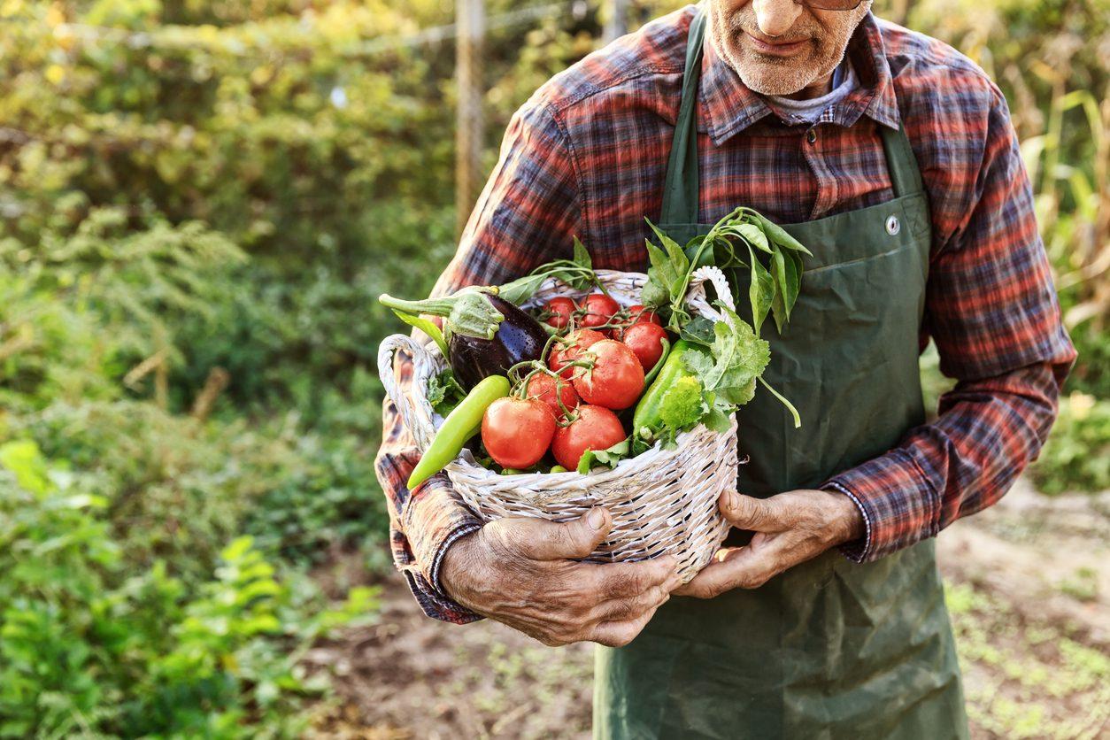 Cosa comprare al mercato a luglio 2021: verdura, frutta e pesce di stagione