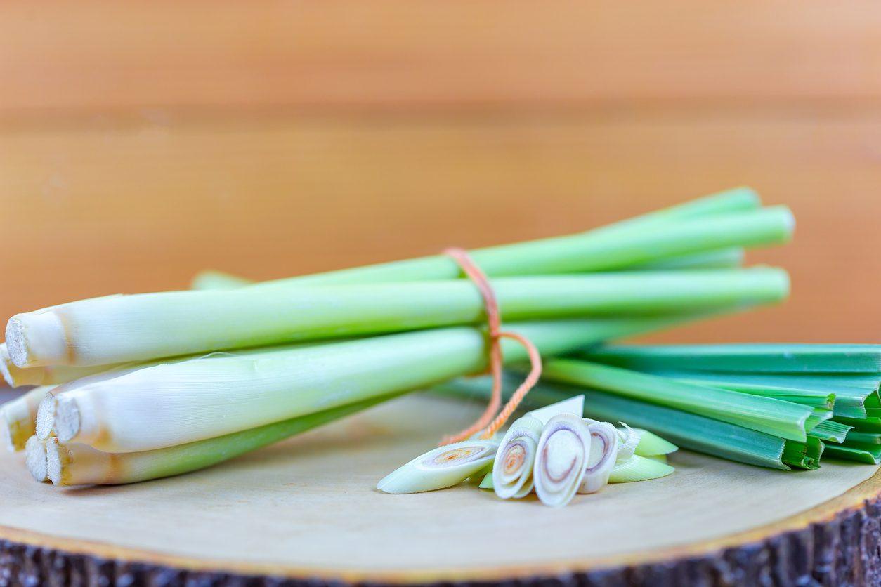 Citronella o lemongrass: proprietà, benefici e come usarla in cucina
