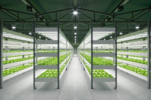 fattoria sotterranea Londra farm piante