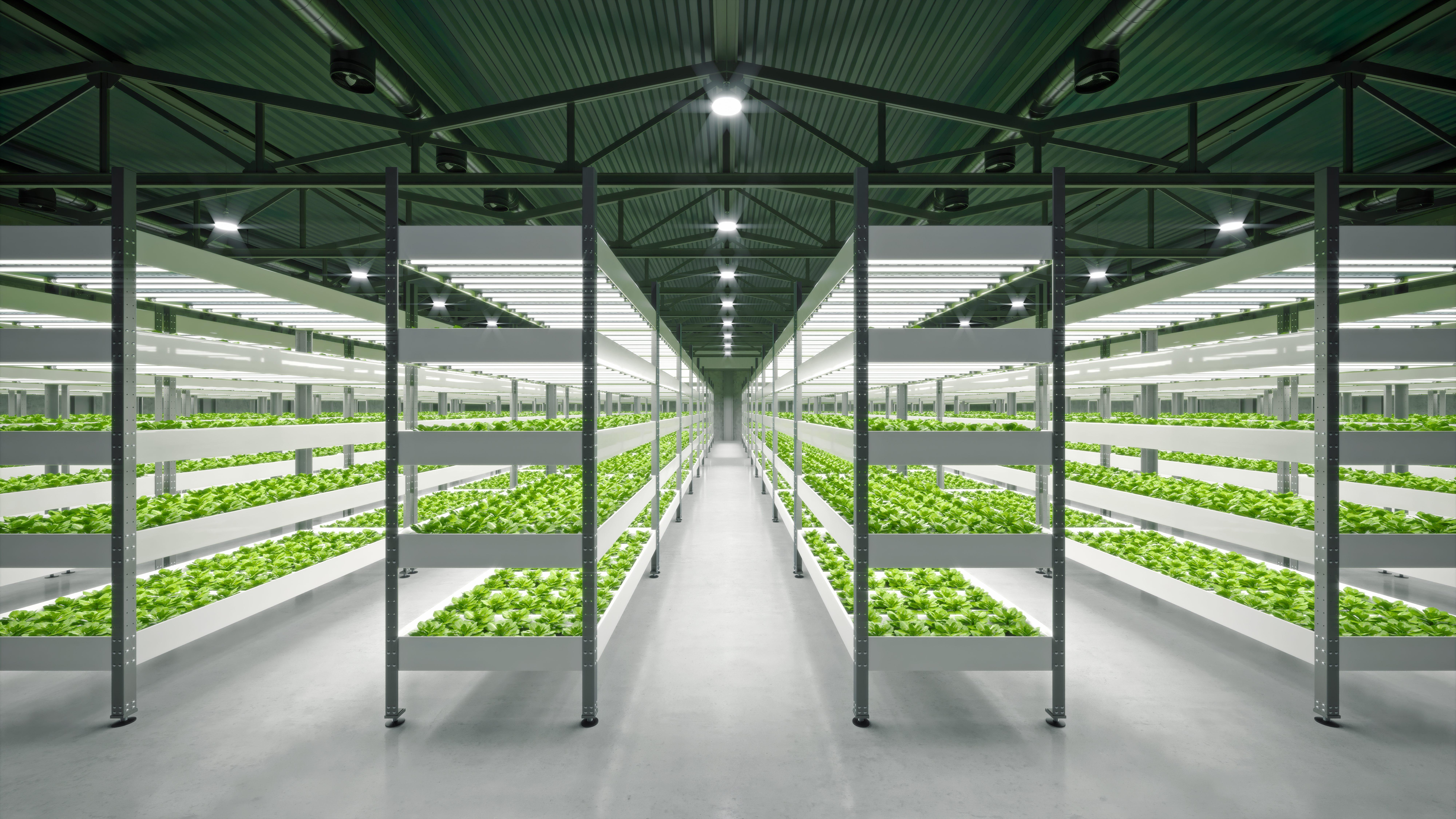 """Ex bunker diventano fattorie sostenibili: a Londra la più """"green"""" è a 30 metri sottoterra"""