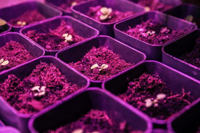 fattoria sotterranea Londra farm piante led