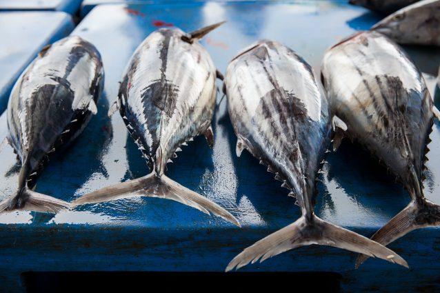 tonno tuna Fishtuna sicilia Favignana