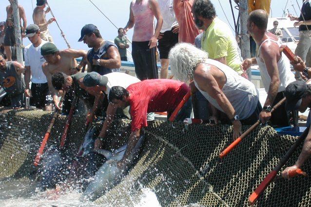 tonnara Favignana sicilia tonno Fishtuna